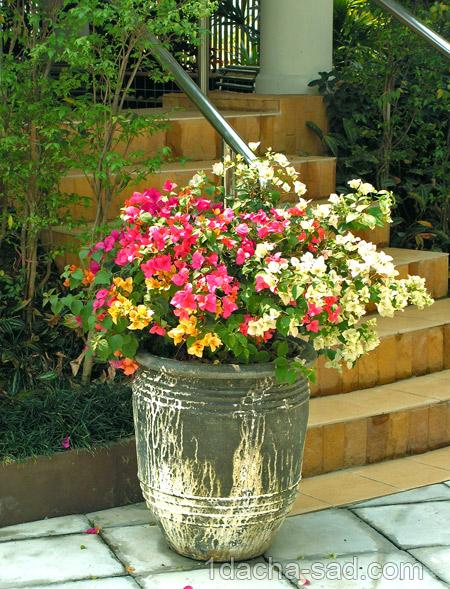 Сад красивым — принципы создания сада
